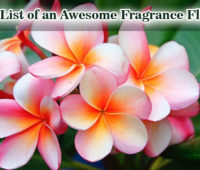 The List of an Awesome Fragrance Flowers